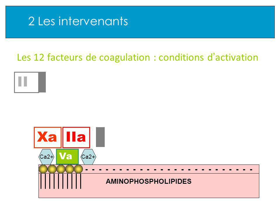 2 Les intervenants Les 12 facteurs de coagulation : conditions d activation Va XaIIa AMINOPHOSPHOLIPIDES - - - - - - - - - - - - - - - - - - - - - - -