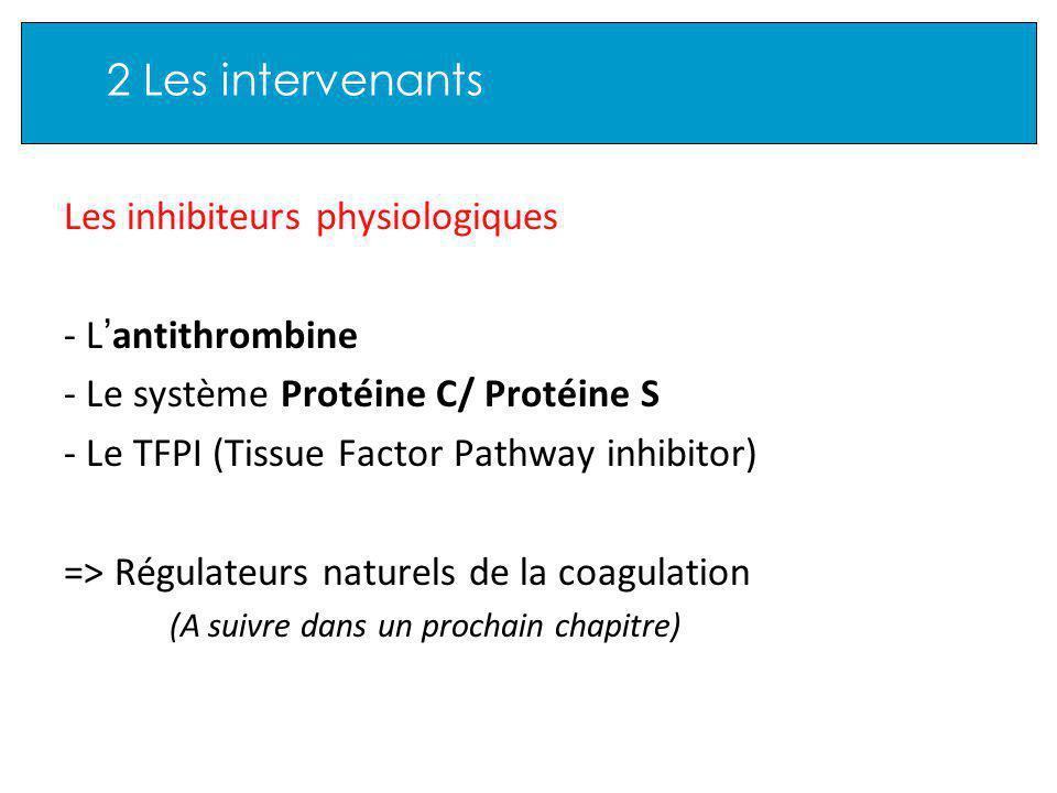 2 Les intervenants Les inhibiteurs physiologiques - L antithrombine - Le système Protéine C/ Protéine S - Le TFPI (Tissue Factor Pathway inhibitor) => Régulateurs naturels de la coagulation (A suivre dans un prochain chapitre)