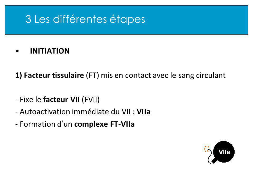 3 Les différentes étapes INITIATION 1) Facteur tissulaire (FT) mis en contact avec le sang circulant - Fixe le facteur VII (FVII) - Autoactivation immédiate du VII : VIIa - Formation d un complexe FT-VIIa VIIa