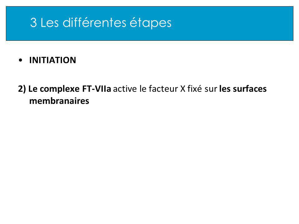 3 Les différentes étapes INITIATION 2) Le complexe FT-VIIa active le facteur X fixé sur les surfaces membranaires