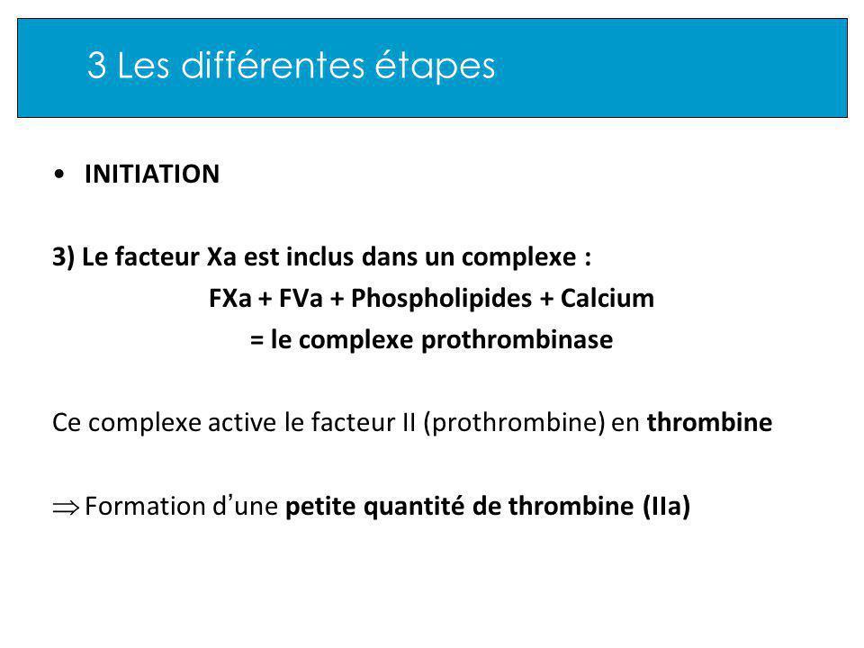 3 Les différentes étapes INITIATION 3) Le facteur Xa est inclus dans un complexe : FXa + FVa + Phospholipides + Calcium = le complexe prothrombinase Ce complexe active le facteur II (prothrombine) en thrombine Formation d une petite quantité de thrombine (IIa)
