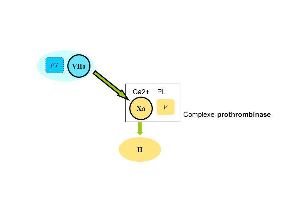VIIa II Xa FT V Ca2+PL Complexe prothrombinase