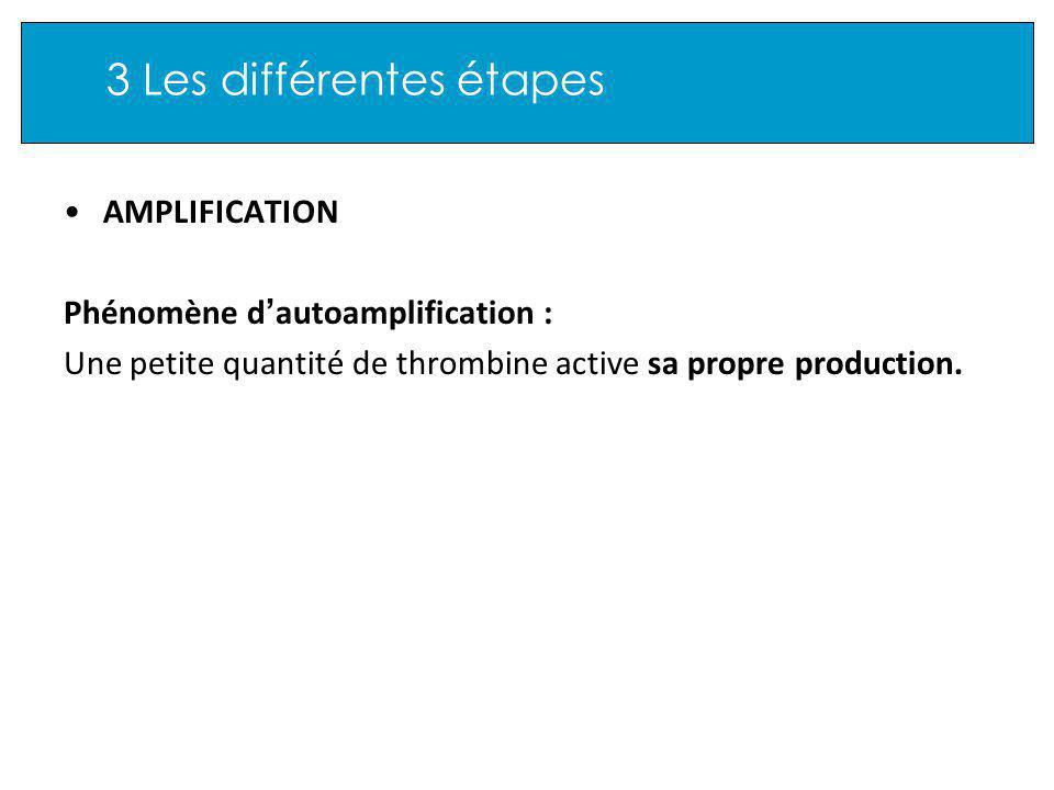 3 Les différentes étapes AMPLIFICATION Phénomène d autoamplification : Une petite quantité de thrombine active sa propre production.
