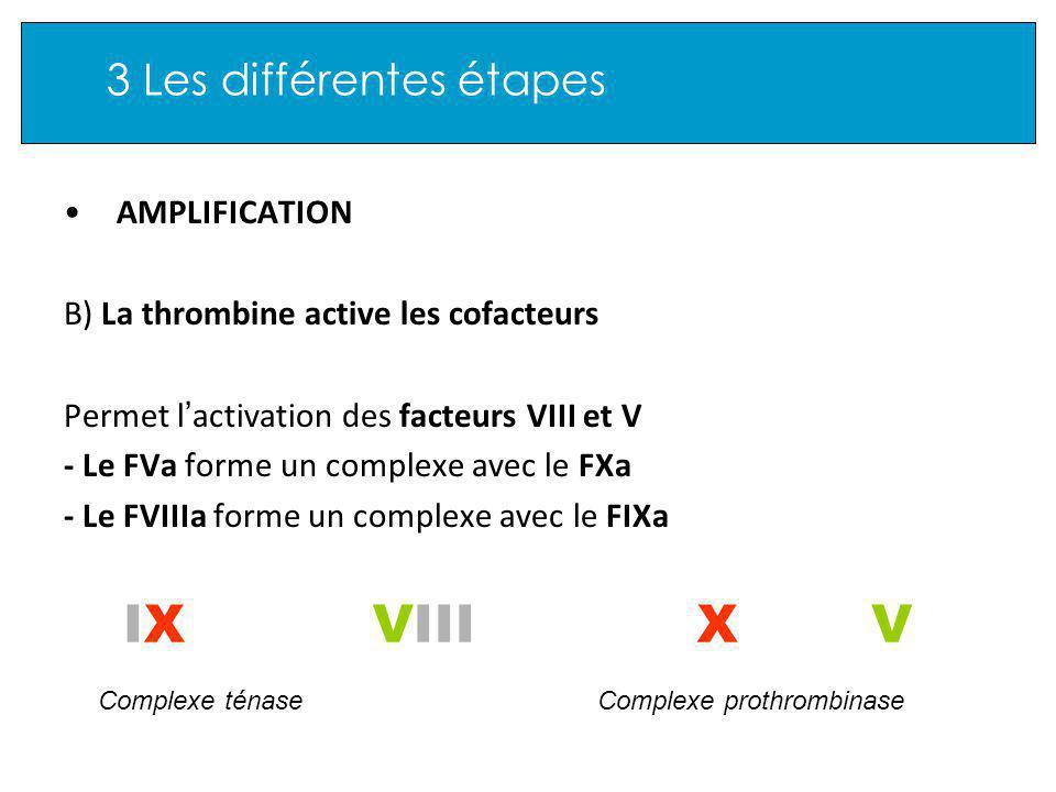 3 Les différentes étapes AMPLIFICATION B) La thrombine active les cofacteurs Permet l activation des facteurs VIII et V - Le FVa forme un complexe avec le FXa - Le FVIIIa forme un complexe avec le FIXa IXIXVXVIII Complexe prothrombinaseComplexe ténase