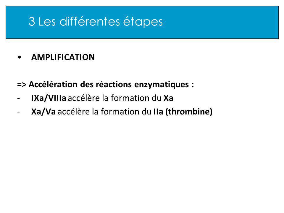 3 Les différentes étapes AMPLIFICATION => Accélération des réactions enzymatiques : -IXa/VIIIa accélère la formation du Xa -Xa/Va accélère la formation du IIa (thrombine)