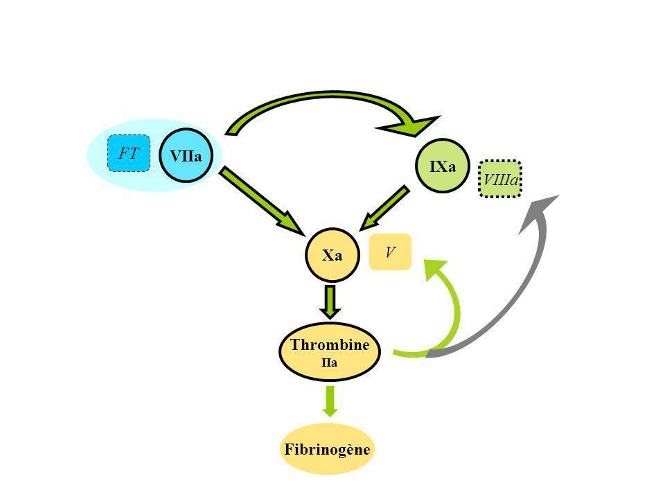 VIIa Thrombine IIa Xa Fibrinogène IXa FT VIIIa V
