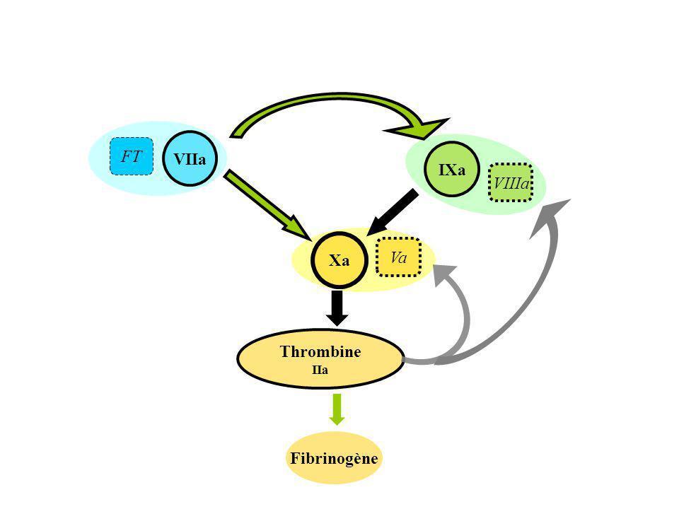 VIIa Thrombine IIa Xa Fibrinogène IXa FT VIIIa Va