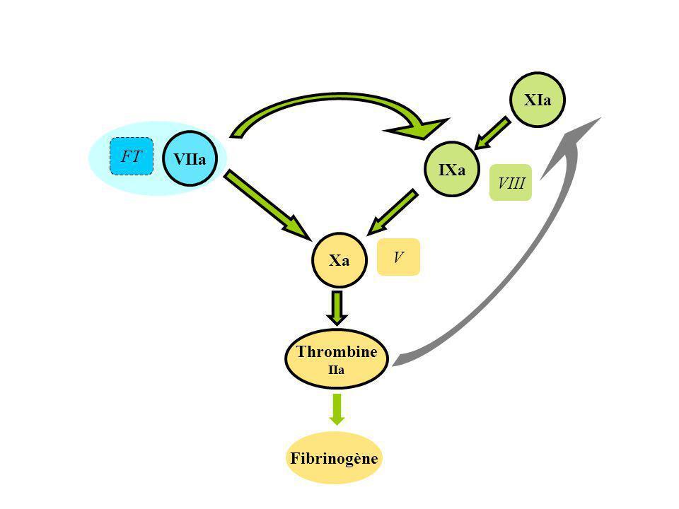 VIIa Thrombine IIa Xa Fibrinogène IXa XIa FT VIII V