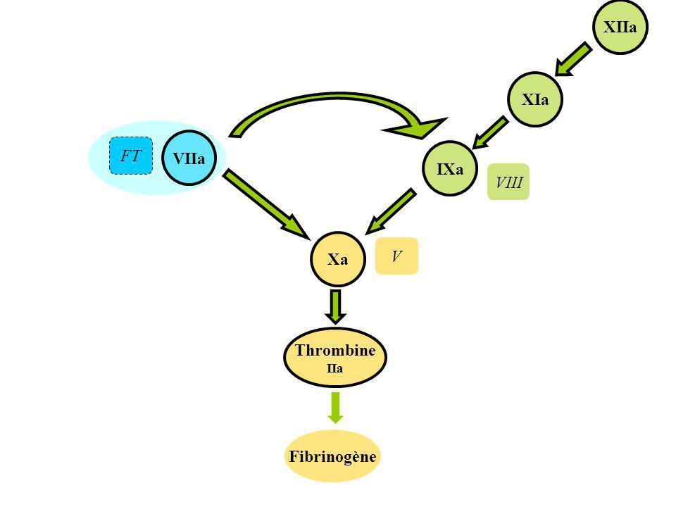 VIIa Thrombine IIa Xa Fibrinogène IXa XIa XIIa FT VIII V