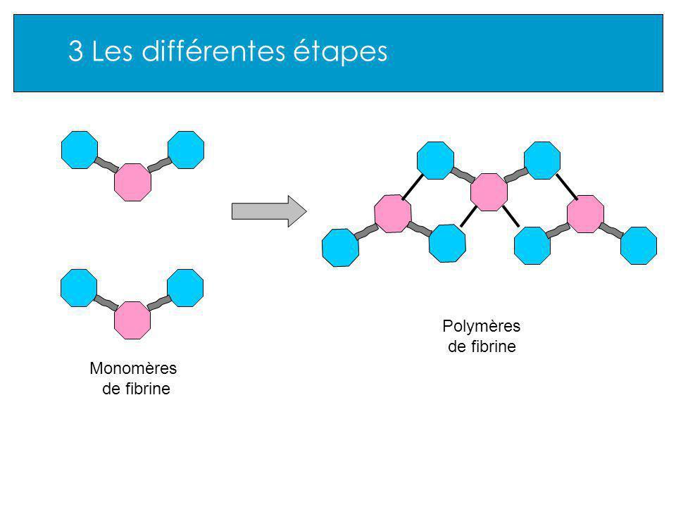 3 Les différentes étapes Monomères de fibrine Polymères de fibrine