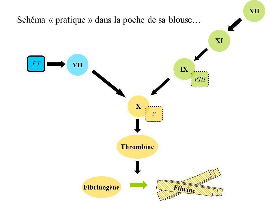VII Thrombine X Fibrinogène IX XI XII FT VIII V Fibrine Schéma « pratique » dans la poche de sa blouse…
