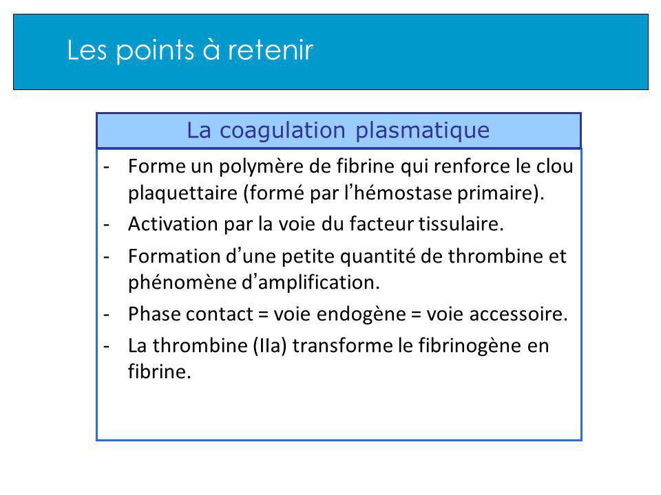 Les points à retenir -Forme un polymère de fibrine qui renforce le clou plaquettaire (formé par l hémostase primaire).