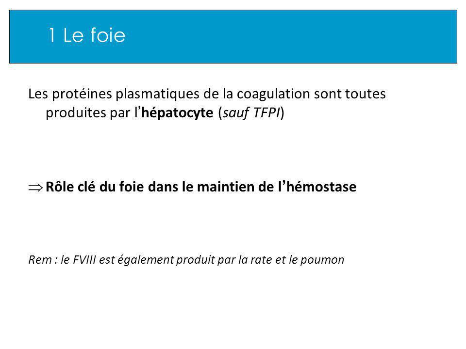1 Le foie Les protéines plasmatiques de la coagulation sont toutes produites par l hépatocyte (sauf TFPI) Rôle clé du foie dans le maintien de l hémostase Rem : le FVIII est également produit par la rate et le poumon