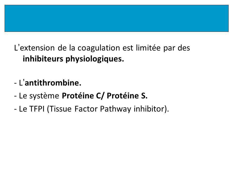 L extension de la coagulation est limitée par des inhibiteurs physiologiques.