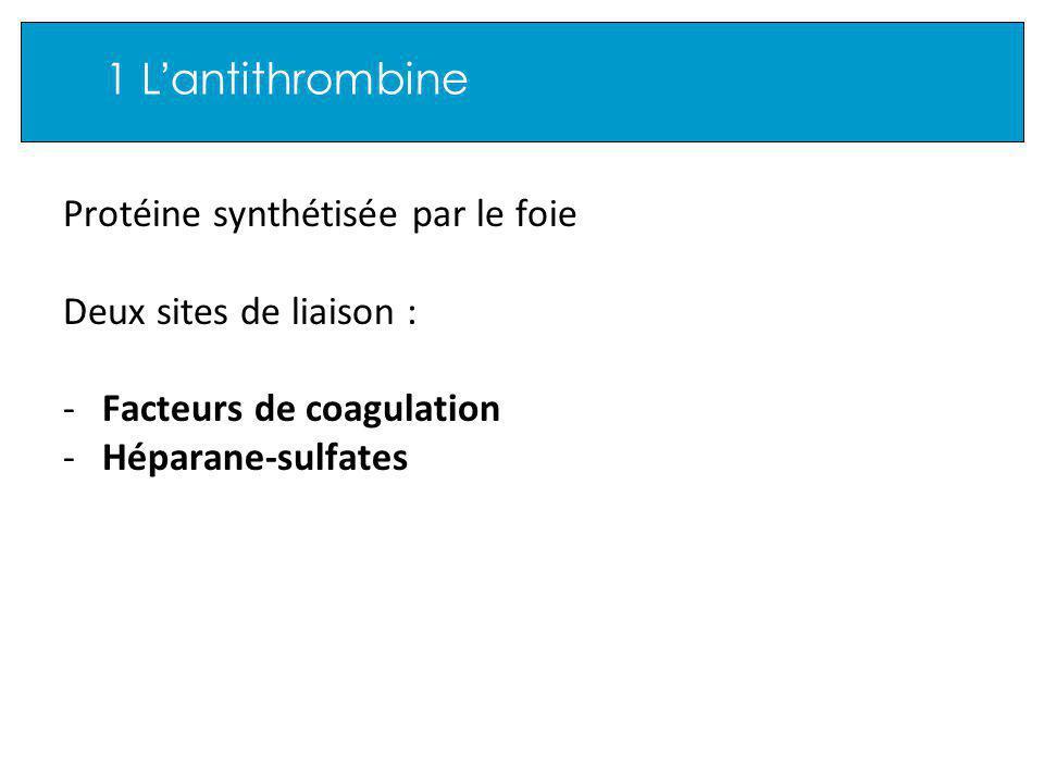 1 L antithrombine Protéine synthétisée par le foie Deux sites de liaison : -Facteurs de coagulation -Héparane-sulfates