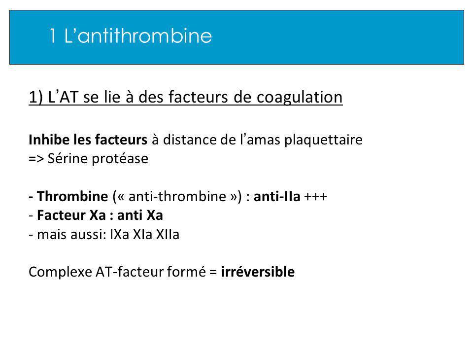 1 L antithrombine 1) L AT se lie à des facteurs de coagulation Inhibe les facteurs à distance de l amas plaquettaire => Sérine protéase - Thrombine (« anti-thrombine ») : anti-IIa +++ - Facteur Xa : anti Xa - mais aussi: IXa XIa XIIa Complexe AT-facteur formé = irréversible