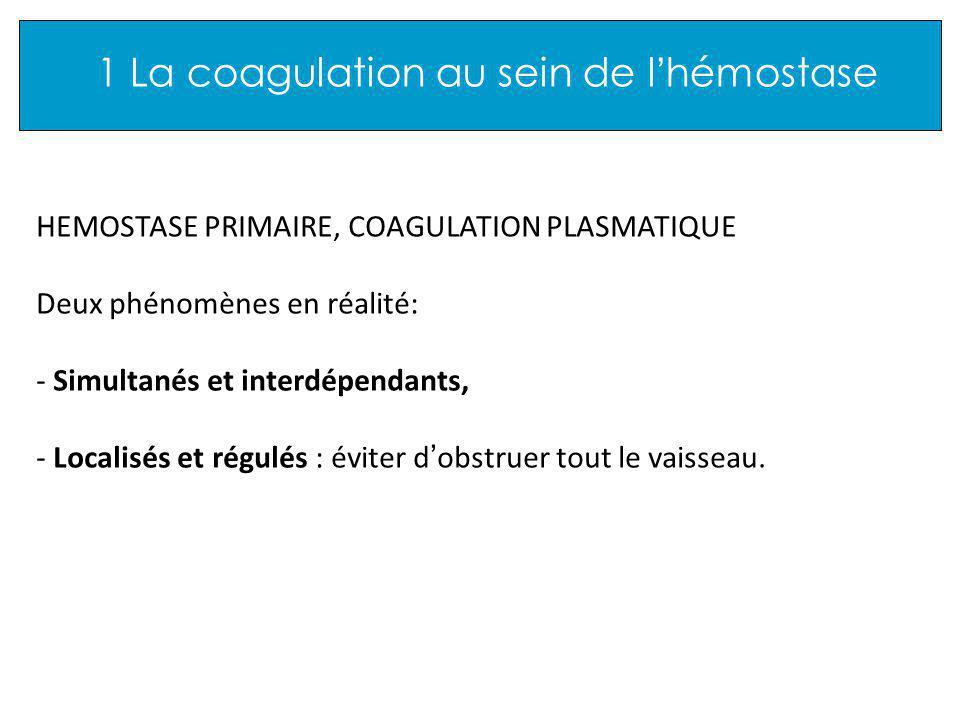 1 La coagulation au sein de l hémostase HEMOSTASE PRIMAIRE, COAGULATION PLASMATIQUE Deux phénomènes en réalité: - Simultanés et interdépendants, - Localisés et régulés : éviter d obstruer tout le vaisseau.