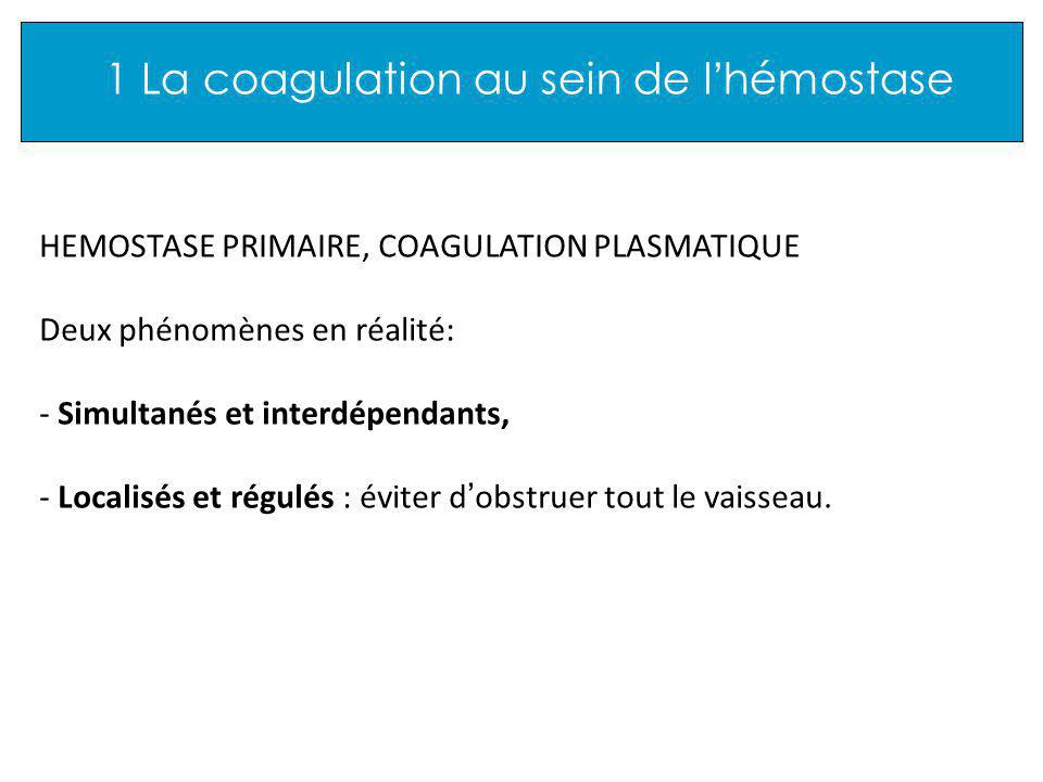 3 Les différentes étapes + Fibrinogène Monomères de fibrine Fibrinopeptides A et B Thrombine IIa