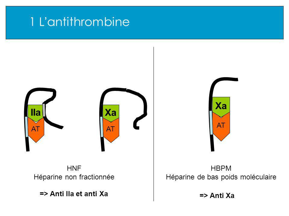 1 L antithrombine AT Xa AT IIa AT Xa HNF Héparine non fractionnée HBPM Héparine de bas poids moléculaire => Anti IIa et anti Xa => Anti Xa
