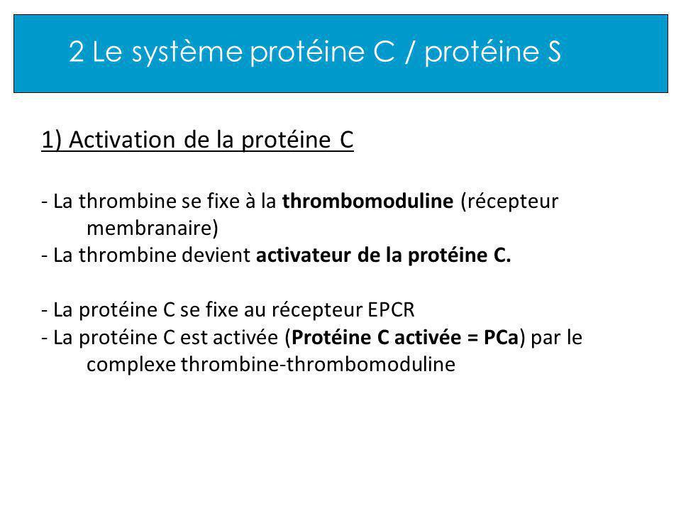 2 Le système protéine C / protéine S 1) Activation de la protéine C - La thrombine se fixe à la thrombomoduline (récepteur membranaire) - La thrombine devient activateur de la protéine C.
