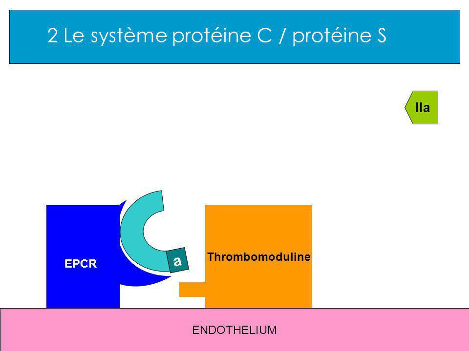 2 Le système protéine C / protéine S ENDOTHELIUM EPCR Thrombomoduline IIa a