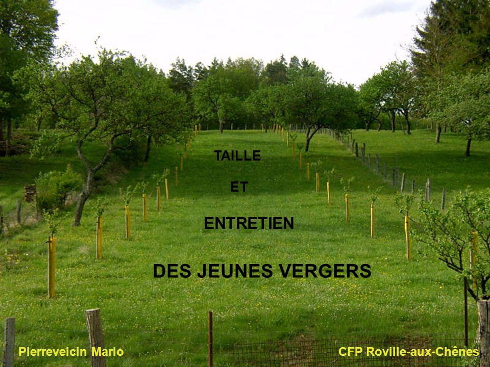 TAILLE ET ENTRETIEN DES JEUNES VERGERS Pierrevelcin Mario CFP Roville-aux-Chênes