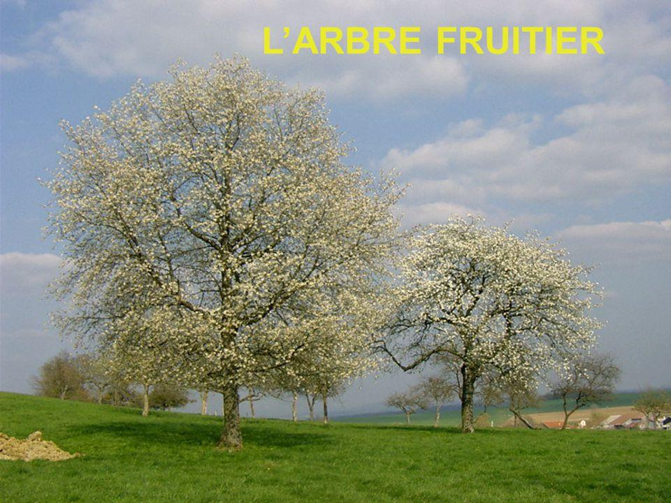 LARBRE FRUITIER
