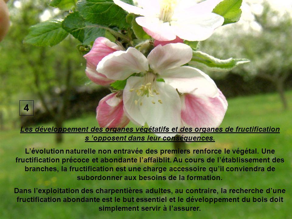 Les développement des organes végétatifs et des organes de fructification s opposent dans leur conséquences. Lévolution naturelle non entravée des pre