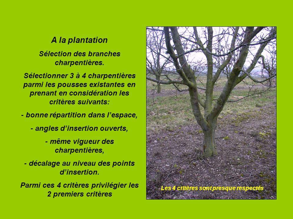 A la plantation Sélection des branches charpentières. Sélectionner 3 à 4 charpentières parmi les pousses existantes en prenant en considération les cr