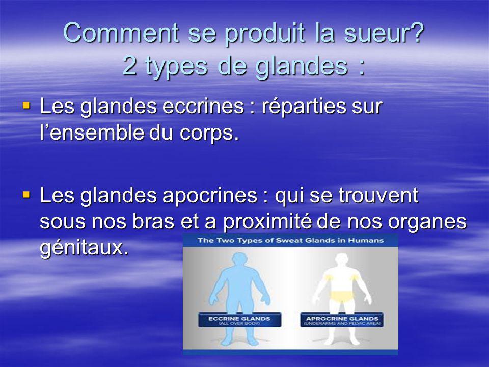 Comment se produit la sueur? 2 types de glandes : Les glandes eccrines : réparties sur lensemble du corps. Les glandes eccrines : réparties sur lensem