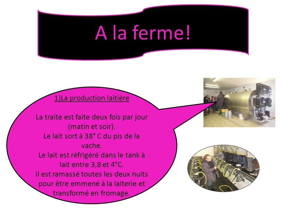 A la ferme! 1)La production laitière La traite est faite deux fois par jour (matin et soir). Le lait sort à 38° C du pis de la vache. Le lait est réfr
