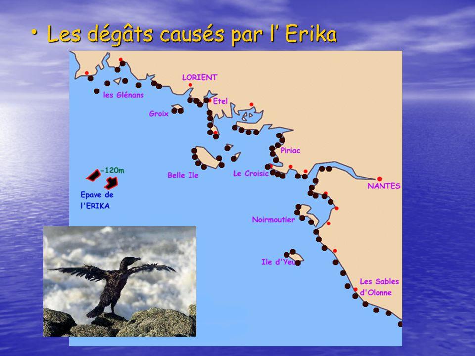 Les dégâts causés par l Erika Les dégâts causés par l Erika