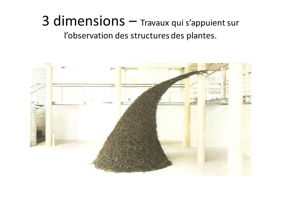 3 dimensions – Travaux qui sappuient sur lobservation des structures des plantes.