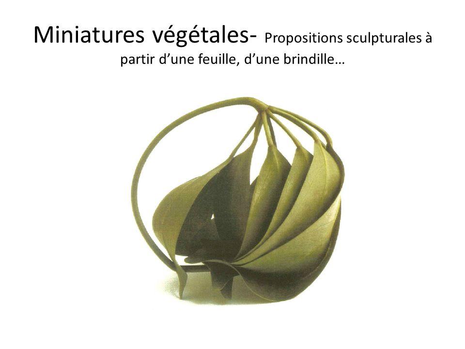 Miniatures végétales- Propositions sculpturales à partir dune feuille, dune brindille…