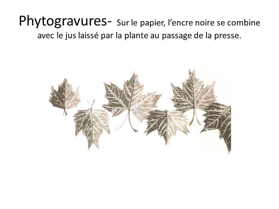 Phytogravures- Sur le papier, lencre noire se combine avec le jus laissé par la plante au passage de la presse.