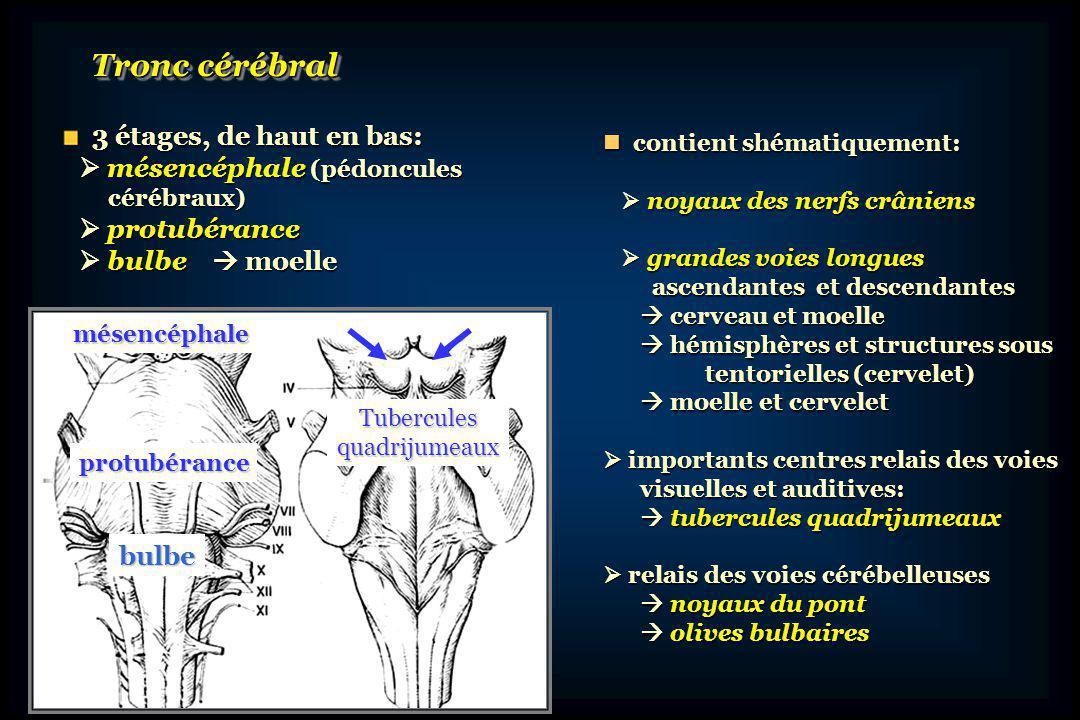 CerveletCervelet vermis et hémisphères cérébelleux vermis et hémisphères cérébelleux pédoncules cérébelleux supérieurs, pédoncules cérébelleux supérieurs, moyens et inférieurs moyens et inférieurs reliés au tronc cérébral reliés au tronc cérébral voies afférentes et efférentes voies afférentes et efférentes du cervelet du cervelet centre de léquilibration vestibulaire centre de léquilibration vestibulaire contrôle tonus de posture contrôle tonus de posture coordination mouvement volontaire coordination mouvement volontaire fonctions cognitives++ fonctions cognitives++ Organe dintégration