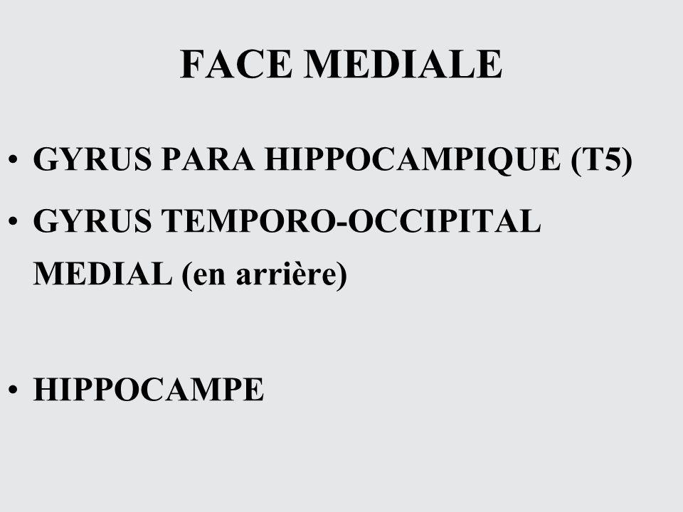 FACE MEDIALE GYRUS PARA HIPPOCAMPIQUE (T5) GYRUS TEMPORO-OCCIPITAL MEDIAL (en arrière) HIPPOCAMPE