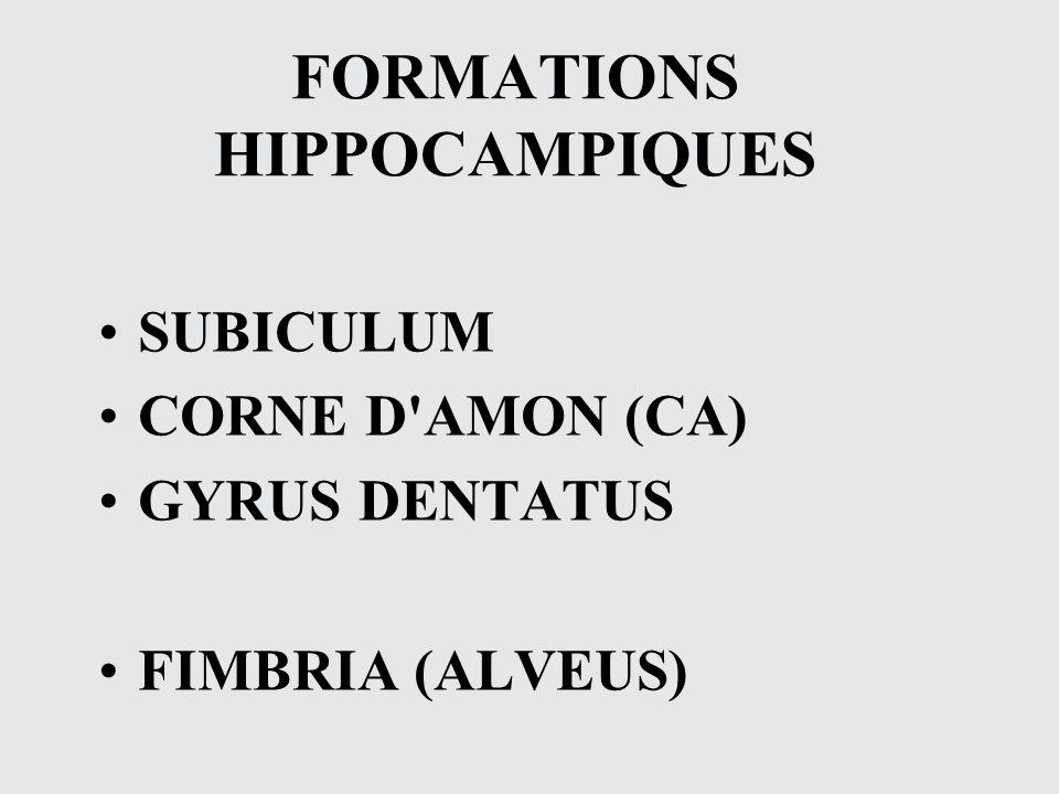 FORMATIONS HIPPOCAMPIQUES SUBICULUM CORNE D'AMON (CA) GYRUS DENTATUS FIMBRIA (ALVEUS)