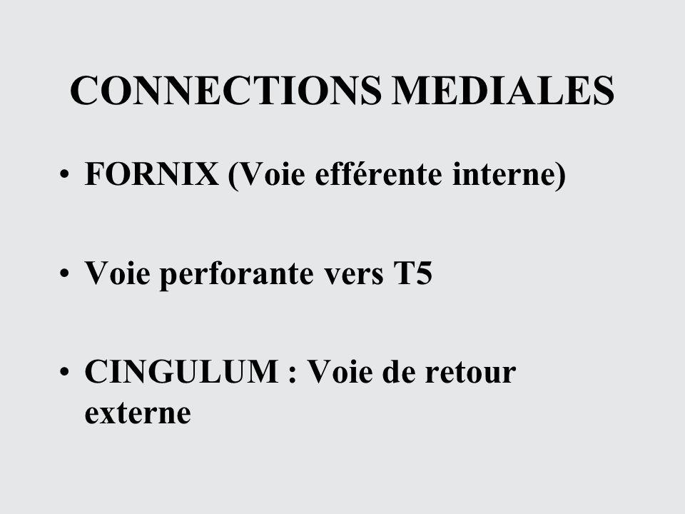 CONNECTIONS MEDIALES FORNIX (Voie efférente interne) Voie perforante vers T5 CINGULUM : Voie de retour externe