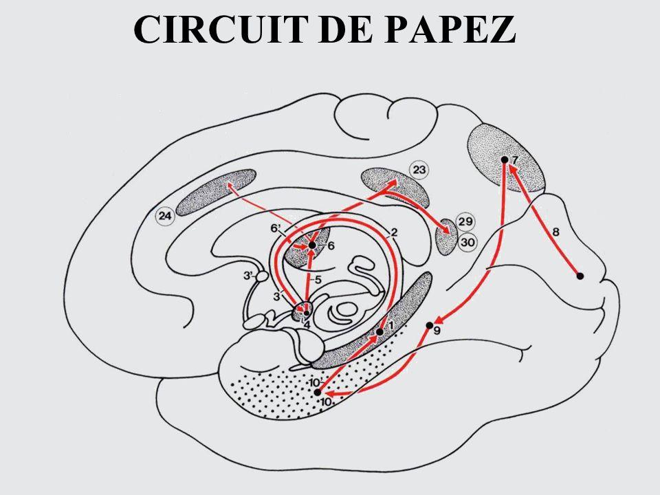 CIRCUIT DE PAPEZ