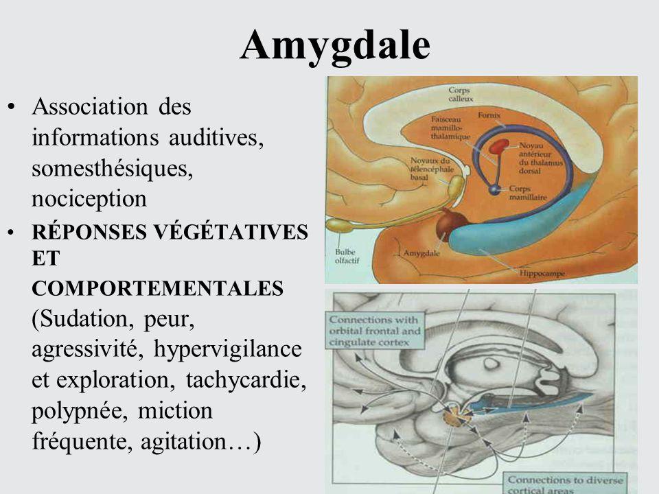 Association des informations auditives, somesthésiques, nociception RÉPONSES VÉGÉTATIVES ET COMPORTEMENTALES (Sudation, peur, agressivité, hypervigila