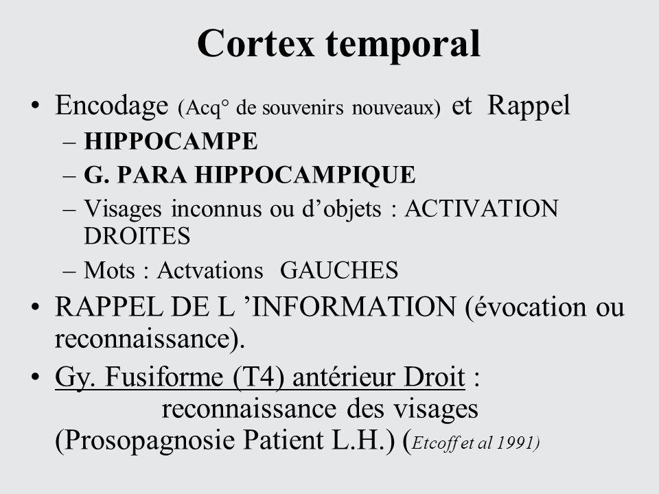 Cortex temporal Encodage (Acq° de souvenirs nouveaux) et Rappel –HIPPOCAMPE –G. PARA HIPPOCAMPIQUE –Visages inconnus ou dobjets : ACTIVATION DROITES –
