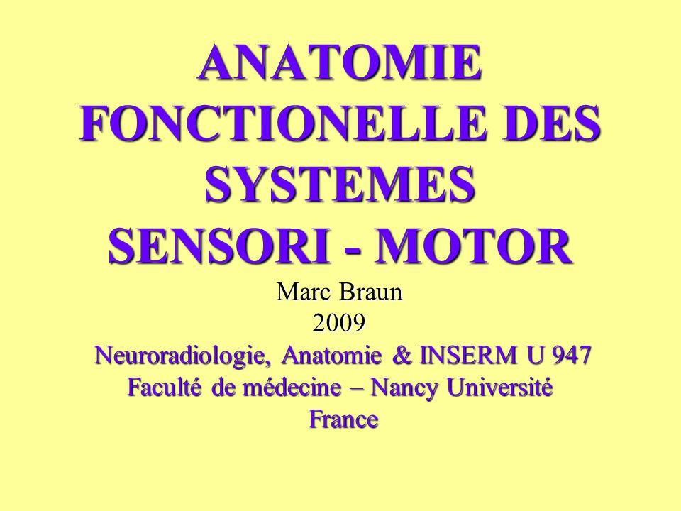 ANATOMIE FONCTIONELLE DES SYSTEMES SENSORI - MOTOR Marc Braun 2009 Neuroradiologie, Anatomie & INSERM U 947 Faculté de médecine – Nancy Université Fra