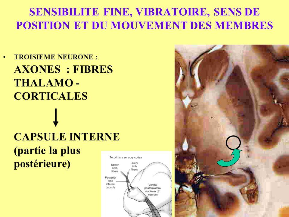 SENSIBILITE FINE, VIBRATOIRE, SENS DE POSITION ET DU MOUVEMENT DES MEMBRES TROISIEME NEURONE : AXONES : FIBRES THALAMO - CORTICALES CAPSULE INTERNE (p