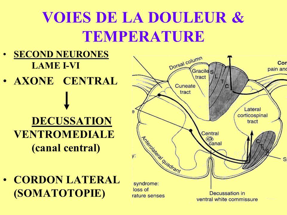 VOIES DE LA DOULEUR & TEMPERATURE SECOND NEURONES LAME I-VI AXONE CENTRAL DECUSSATION VENTROMEDIALE (canal central) CORDON LATERAL (SOMATOTOPIE)