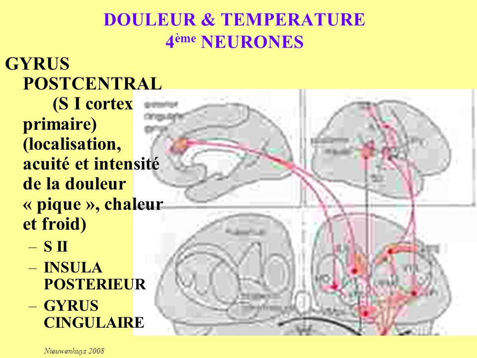DOULEUR & TEMPERATURE 4 ème NEURONES GYRUS POSTCENTRAL (S I cortex primaire) (localisation, acuité et intensité de la douleur « pique », chaleur et fr