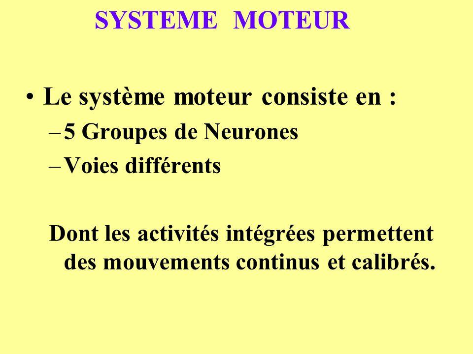 SYSTEME MOTEUR Le système moteur consiste en : –5 Groupes de Neurones –Voies différents Dont les activités intégrées permettent des mouvements continu