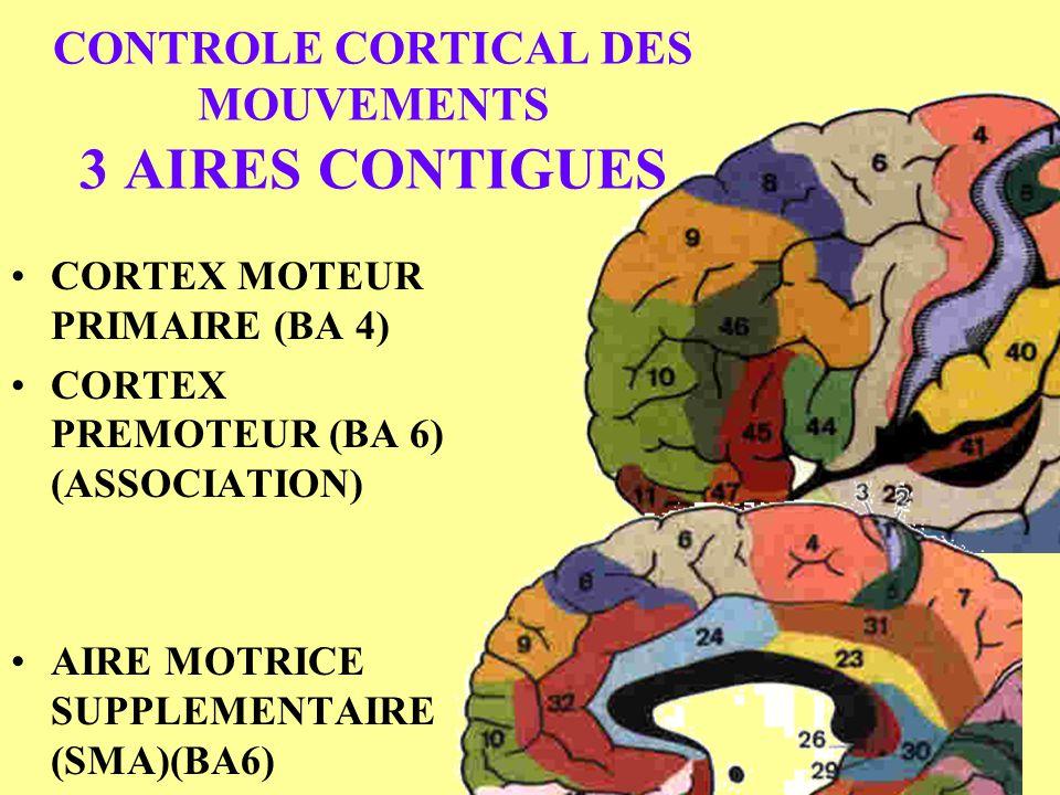 CONTROLE CORTICAL DES MOUVEMENTS 3 AIRES CONTIGUES CORTEX MOTEUR PRIMAIRE (BA 4) CORTEX PREMOTEUR (BA 6) (ASSOCIATION) AIRE MOTRICE SUPPLEMENTAIRE (SM