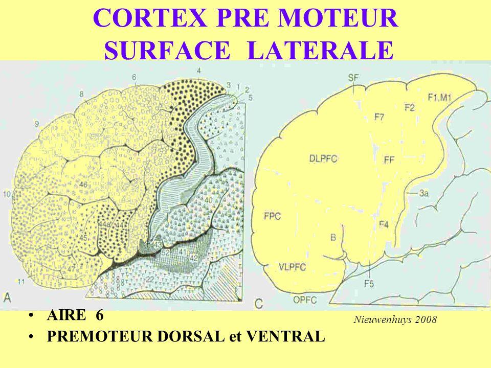CORTEX PRE MOTEUR SURFACE LATERALE AIRE 6 PREMOTEUR DORSAL et VENTRAL Nieuwenhuys 2008