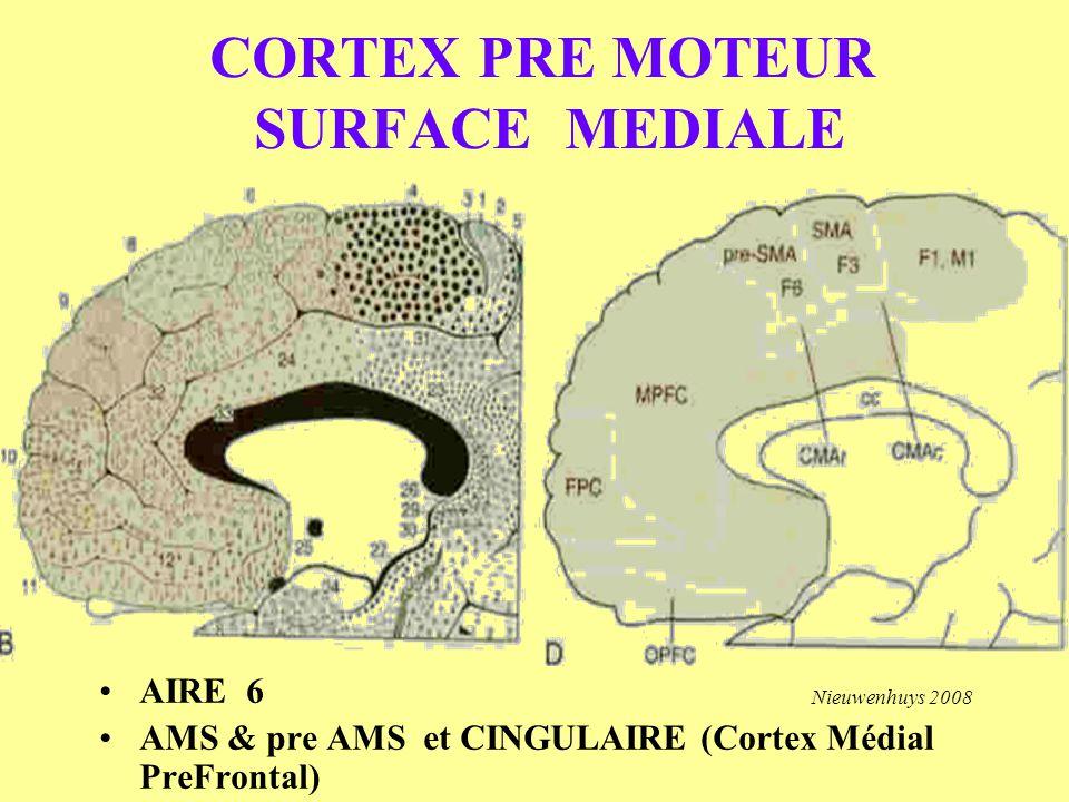 CORTEX PRE MOTEUR SURFACE MEDIALE AIRE 6 AMS & pre AMS et CINGULAIRE (Cortex Médial PreFrontal) Nieuwenhuys 2008